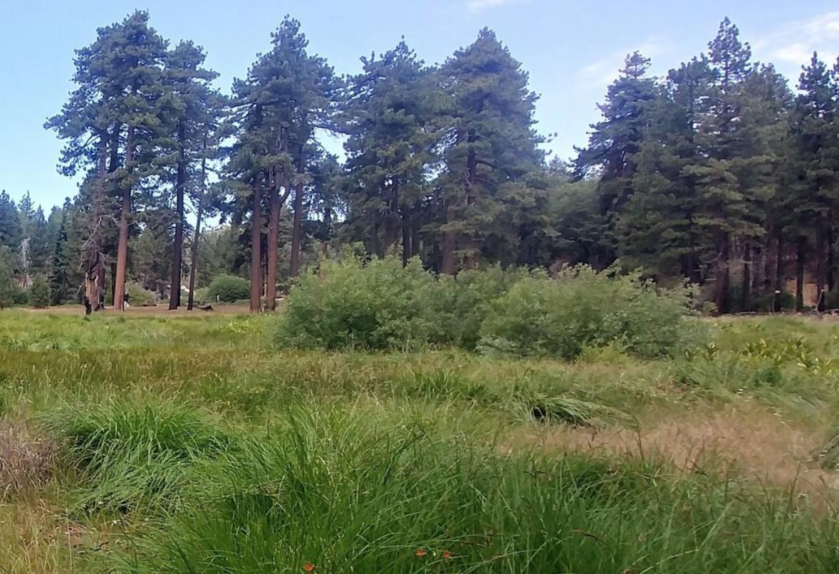 Running Little Green Valley Trail (Running Springs, CA)